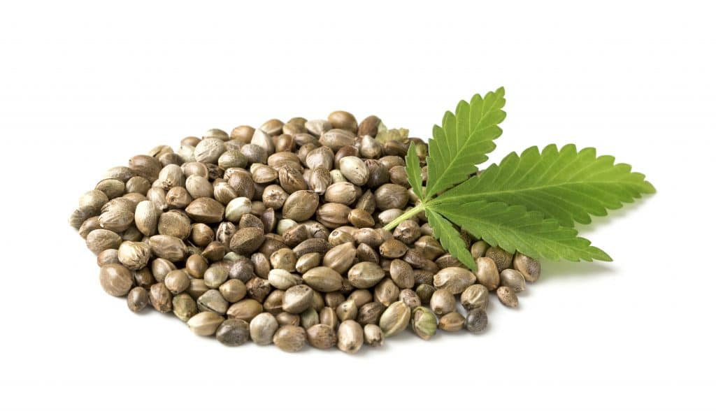 Qu'est-ce que les graines de chanvre ?